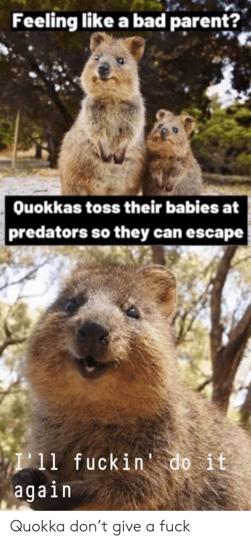 Bad, Do It Again, and Predators: Feeling like a bad parent?  Ouokkas toss their babies at  predators so they can escape  I11 fuckin do it  again Quokka don't give a fuck