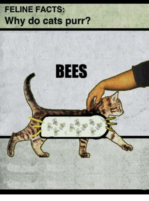 Cats, Facts, and Bees: FELINE FACTS:  Why do cats purr?  BEES