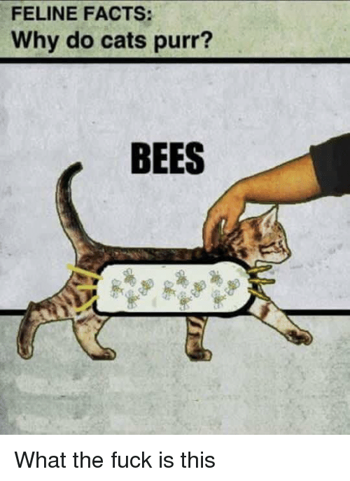 Why Do Cats Purr Bees