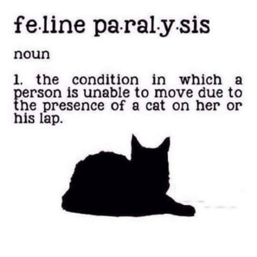 Her, Cat, and Move: feline pa ralysis  noun  1. the condition in which a  person is unable to move due to  the presence of a cat on her or  his lap.