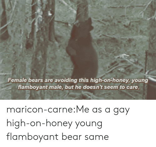 Tumblr, Bear, and Bears: Female bears are avoiding this high-on-honey, young  flamboyant male, but he doesn't seem to care, maricon-carne:Me as a gay high-on-honey young flamboyant bear  same