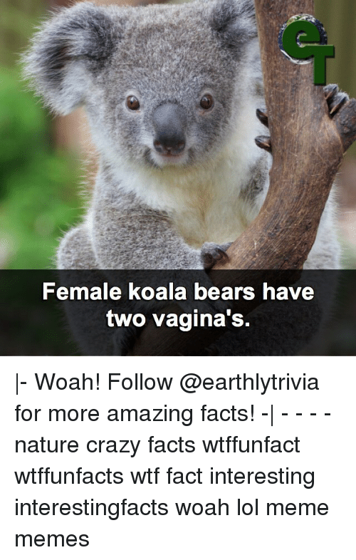 Female koalas have 2 lateral vaginas, which lead to