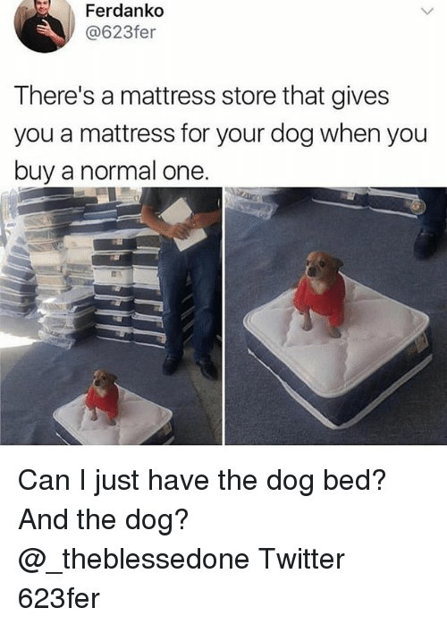 Memes, Twitter, and Mattress: Ferdanko  @623fer  There's a mattress store that gives  you a mattress for your dog when you  buy a normal one. Can I just have the dog bed? And the dog? @_theblessedone Twitter 623fer