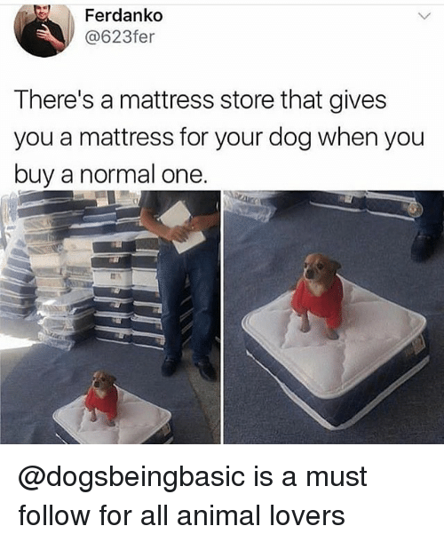 Memes, Animal, and Mattress: Ferdanko  @623fer  There's a mattress store that gives  you a mattress for your dog when you  buy a normal one. @dogsbeingbasic is a must follow for all animal lovers