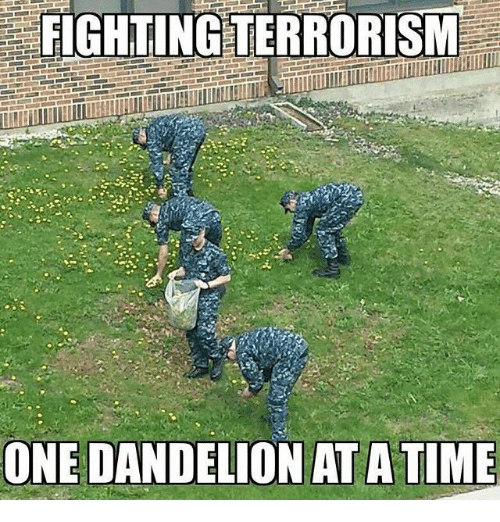 Memes, Terrorism, and 🤖: FIGHTING TERRORISM  ONE DANDELION ATATIME