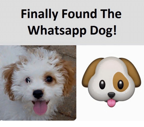 Dog, App, and Whats App: Finally Found The  Whats app Dog!