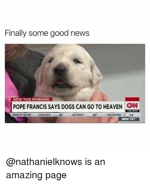 """Detroit, Dogs, and Heaven: Finally some good news  NEW THIS MORNING  POPE FRANCIS SAYS DOGS CAN GO TO HEAVEN CN  725 AMET  CHICAGO26 DETROIT  30""""  63  NEW DAY @nathanielknows is an amazing page"""