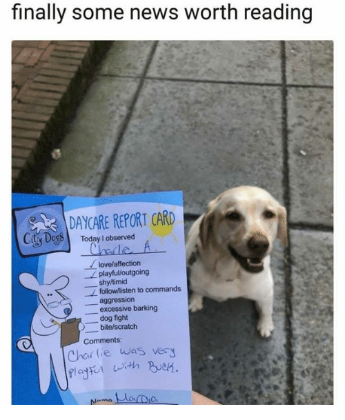 Dogs, Love, and News: finally some news worth reading  DAYCARE REPORT CARD  Ciy Dogs Today lobserved  love/affection  playful/outgoing  shy/timid  follow/listen to commands  aggression  excessive barking  _dog fight  bite/scratch  Comments  Char tie was very
