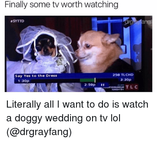 Funny, The Dress, and Arg: Finally some tv worth watching  arg Mang  thSYTTD  258 TLCHD  Say Yes to the Dress  3:30p  1:30p  2:59p Literally all I want to do is watch a doggy wedding on tv lol (@drgrayfang)
