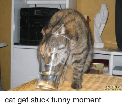 Cats Funny And Nerd Find More Nerd Tests Com Cat Get Stuck Funny