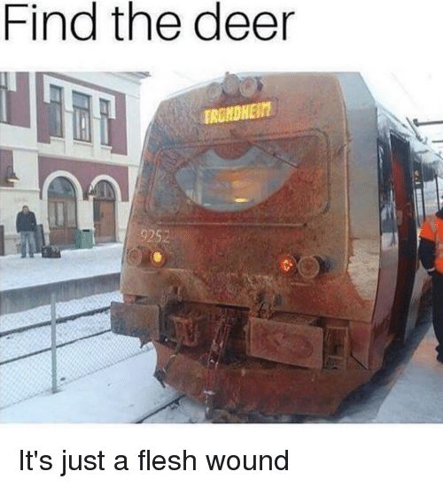 find the deer 92s its just a flesh wound 25392434 ✅ 25 best memes about just a flesh wound just a flesh wound memes