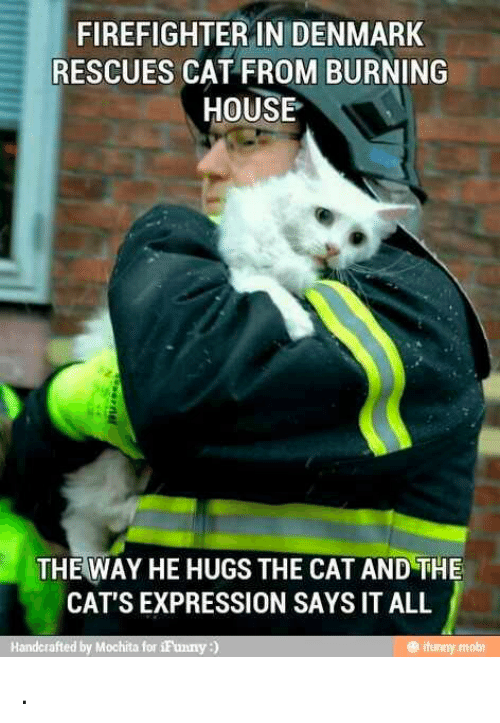 firefighter in denmark rescues cat from burning house the way 12433645 ✅ 25 best memes about firefighter firefighter memes