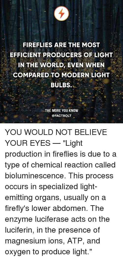 "Memes, The More You Know, and Oxygen: FIREFLIES ARE THE MOST  EFFICIENT PRODUCERS OF LIGHT  IN THE WORLD, EVEN WHEN  COMPARED TO MODERN LIGHT  BULBS.  .  THE MORE YOU KNOW  @FACTBOLT YOU WOULD NOT BELIEVE YOUR EYES — ""Light production in fireflies is due to a type of chemical reaction called bioluminescence. This process occurs in specialized light-emitting organs, usually on a firefly's lower abdomen. The enzyme luciferase acts on the luciferin, in the presence of magnesium ions, ATP, and oxygen to produce light."""