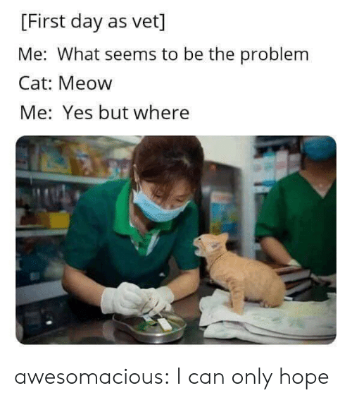 Tumblr, Blog, and Hope: [First day as vet]  Me: What seems to be the problem  Cat: Meow  Me: Yes but where awesomacious:  I can only hope