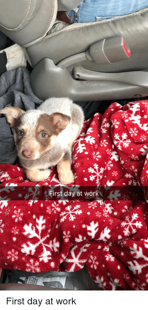 Work, Day, and First: First day at work