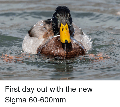 Sigma, Day, and First