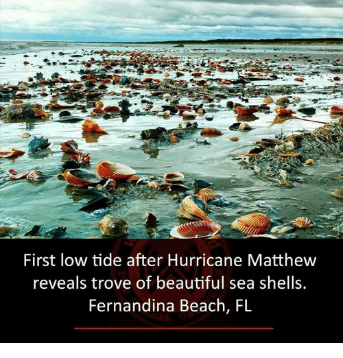 Beautiful Memes And Beach First Low Tide After Hurricane Matthew Reveals Trove Of