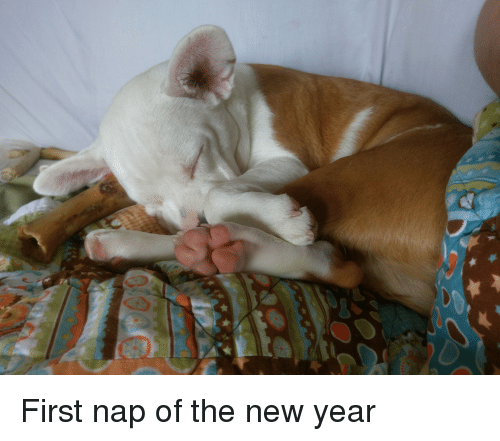 New Year's, American, and Bulldog: First nap of the new year