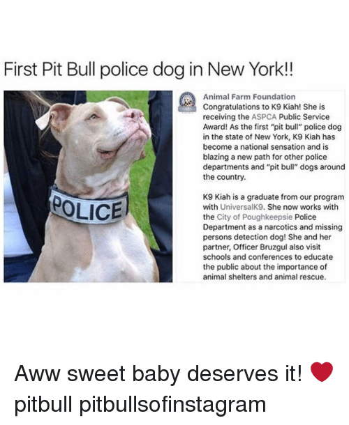 First Pit Bull Police Dog in New York!! Animal Farm