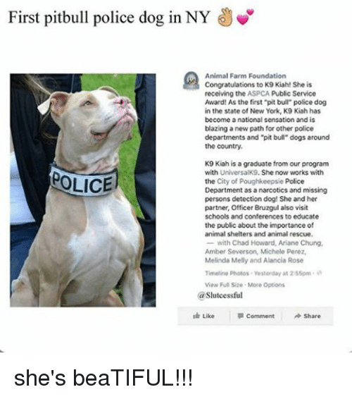 First Pitbull Police Dog in NY Animal Farm Foundation