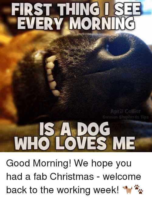 Response To Good Morning In German : Welcome back puppy meme best of the funny