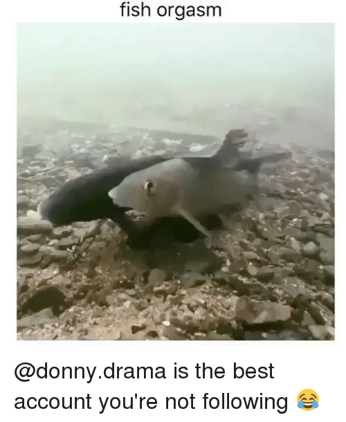 Best, Fish, and Orgasm: fish orgasm @donny.drama is the best account you're not following 😂