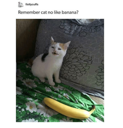 Are Bananas Bad For Cats 2018 Funny Cats