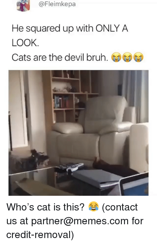 Bruh, Cats, and Memes: @Fleimkepa  He squared up with ONLY A  LOOK  Cats are the devil bruh. Who's cat is this? 😂 (contact us at partner@memes.com for credit-removal)