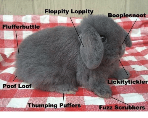 Fluff, Fuzz, and  Poof: Floppity Loppity  Booplesnoot  Fluff erbuttle  Lickitytickler  Poof Loof  Thumping  Puffers  Fuzz scrubbers