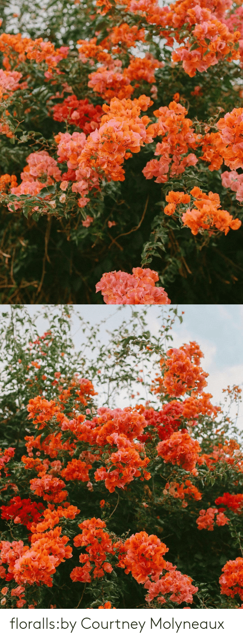 Instagram, Tumblr, and Blog: floralls:by  Courtney Molyneaux