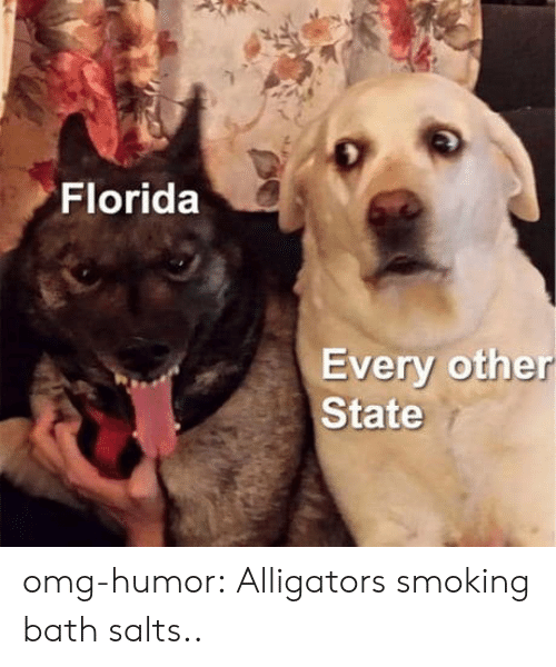Omg, Smoking, and Tumblr: Florida  Every other  State omg-humor:  Alligators smoking bath salts..
