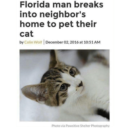 Florida Man, Florida, and Home: Florida man breaks  into neighbor's  home to pet their  cat  by Colin Wolf December 02, 2016 at 10:51 AM  Photo via Pawsitive Shelter Photography