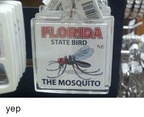 Memes Florida And State FLORIDA STATE BIRD THE MOSQUITO Yep