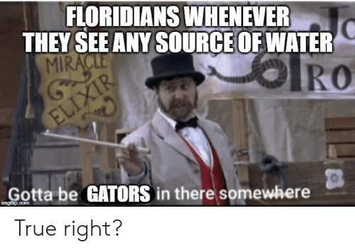 Funny, True, and Water: FLORIDIANS WHENEVER  THEY SEE ANY SOURCE OF WATER  MIRACLE  IRO  ELIXIR  Gotta be GATORS in there somewhere  imgfip.com True right?