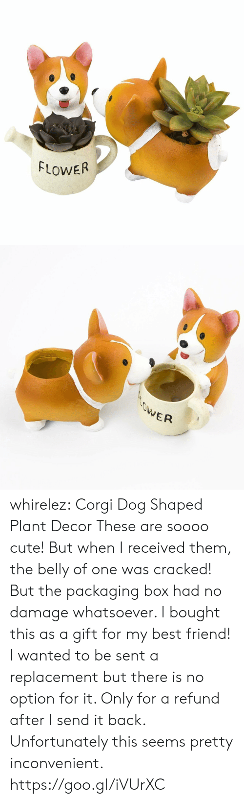 Best Friend, Corgi, and Cute: FLOWER   ER whirelez:    Corgi Dog Shaped Plant Decor    These are soooo cute! But when I received them, the belly of one was cracked! But the packaging box had no damage whatsoever. I bought this as a gift for my best friend! I wanted to be sent a replacement but there is no option for it. Only for a refund after I send it back. Unfortunately this seems pretty inconvenient.  https://goo.gl/iVUrXC