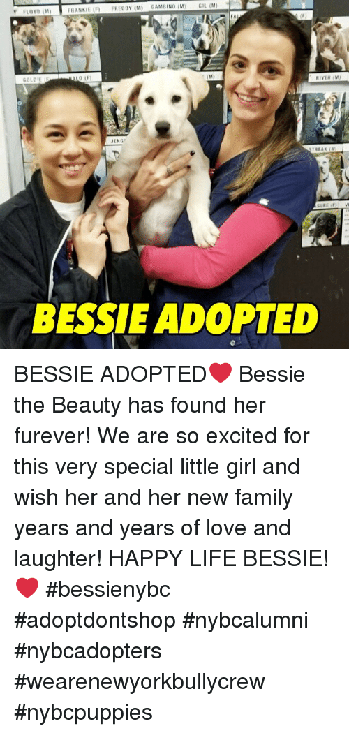 Family, Life, and Love: FLOYD IM)  FA  GOLDIE  RIVER M  JENG  BESSIE ADOPTED BESSIE ADOPTED❤️ Bessie the Beauty has found her furever! We are so excited for this very special little girl and wish her and her new family years and years of love and laughter! HAPPY LIFE BESSIE!❤️ #bessienybc  #adoptdontshop #nybcalumni #nybcadopters #wearenewyorkbullycrew #nybcpuppies