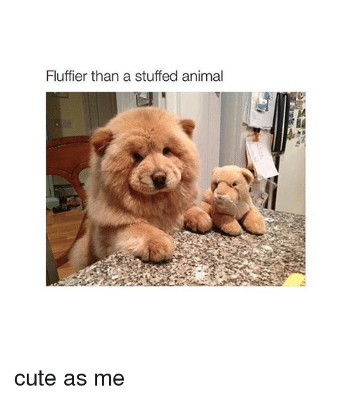 Wonderful Pet Anime Adorable Dog - fluffier-than-a-stuffed-animal-cute-as-me-1779185  Graphic_708990  .png