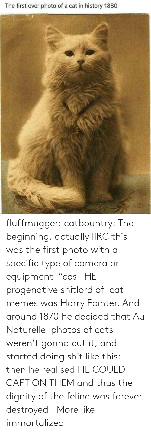 """Cats, Memes, and Tumblr: fluffmugger:  catbountry: The beginning. actually IIRC this was the first photo with a specific type of camera or equipment """"cos THE progenative shitlord of cat memes was Harry Pointer. And around 1870 he decided that Au Naturelle photos of cats weren't gonna cut it, and started doing shit like this: then he realised HE COULD CAPTION THEM and thus the dignity of the feline was forever destroyed.    More like immortalized"""