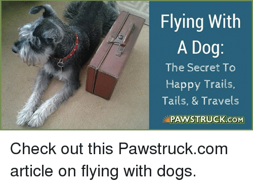 Dogs, Memes, and Happy: Flying With  A Dog  The Secret To  Happy Trails,  Tails, & Travels  PAWSTRUCK.CONM Check out this Pawstruck.com article on flying with dogs.