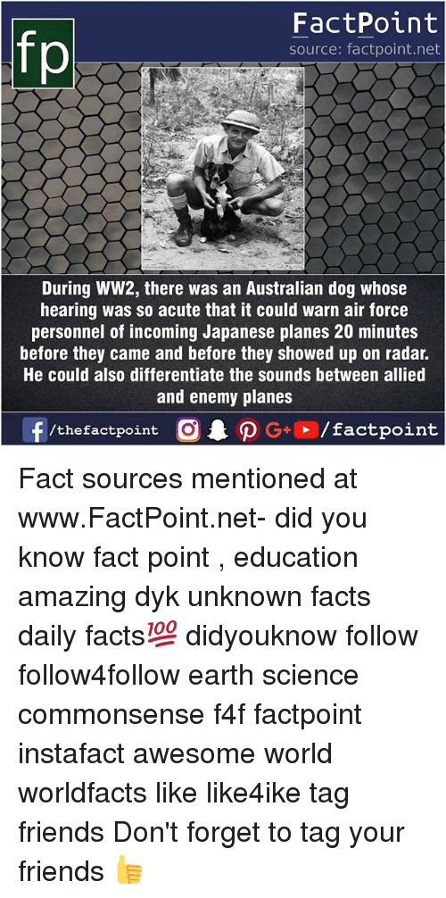 Facts, Friends, and Memes: fo  FactPoint  source: factpoint.net  During WW2, there was an Australian dog whose  hearing was so acute that it could warn air force  personnel of incoming Japanese planes 20 minutes  before they came and before they showed up on radar.  He could also differentiate the sounds between allied  and enemy planes Fact sources mentioned at www.FactPoint.net- did you know fact point , education amazing dyk unknown facts daily facts💯 didyouknow follow follow4follow earth science commonsense f4f factpoint instafact awesome world worldfacts like like4ike tag friends Don't forget to tag your friends 👍