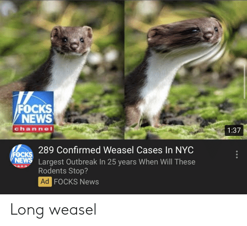 News, 25 Years, and Nyc: FOCKS  NEWS  channe  1:37  289 Confirmed Weasel Cases In NYC  OCKS  NEWS Largest Outbreak In 25 years When Will These  an n  Rodents Stop?  Ad FOCKS News Long weasel