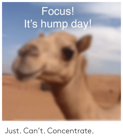 Focus! It's Hump Day! Just Can't Concentrate   Hump Day Meme