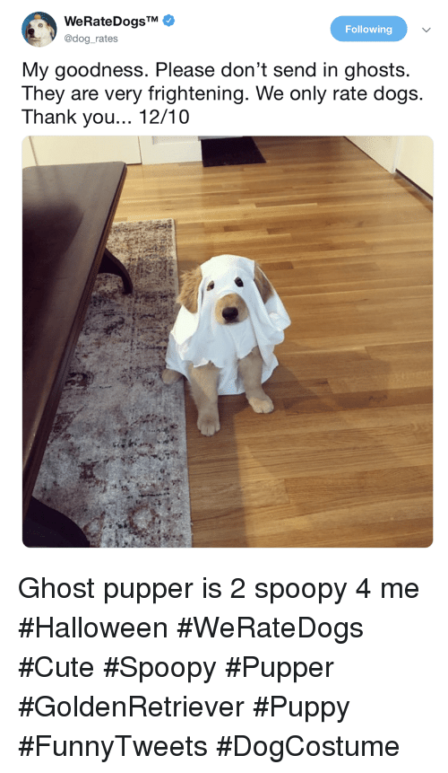 Cute, Dogs, and Halloween: Following  @dog_rates  My goodness. Please don't send in ghosts.  They are very frightening. We only rate dogs.  Thank you... 12/10 Ghost pupper is 2 spoopy 4 me #Halloween #WeRateDogs #Cute #Spoopy #Pupper #GoldenRetriever #Puppy #FunnyTweets #DogCostume