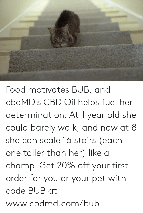 Food, Memes, and Old: Food motivates BUB, and cbdMD's CBD Oil helps fuel her determination. At 1 year old she could barely walk, and now at 8 she can scale 16 stairs (each one taller than her)  like a champ. Get 20% off your first order for you or your pet with code BUB at www.cbdmd.com/bub