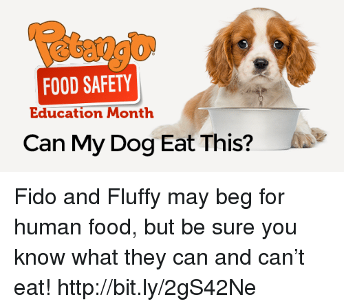 Food Safety Education Month Can My Dog Eat This Fido And Fluffy May