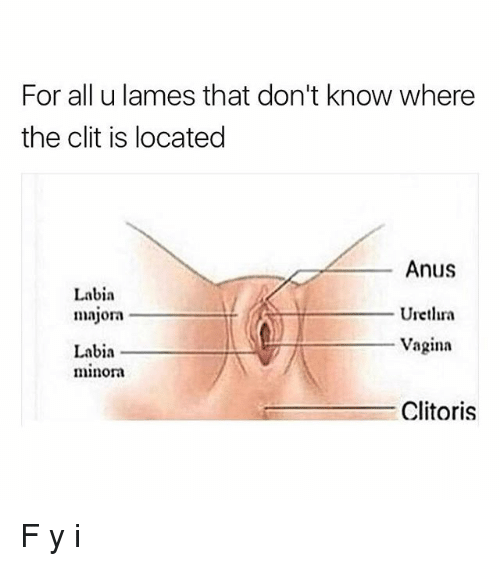 Wher is the clitoris