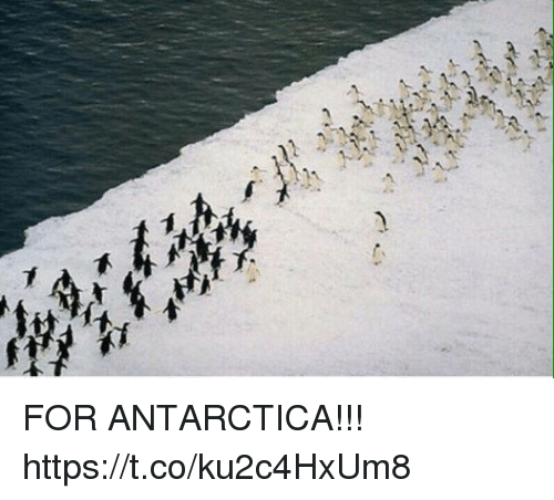 Funny, Antarctica, and For: FOR ANTARCTICA!!! https://t.co/ku2c4HxUm8
