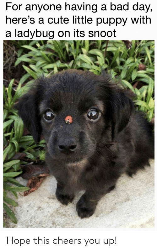 Bad, Bad Day, and Cute: For anyone having a bad day,  here's a cute little puppy with  a ladybug on its snoot Hope this cheers you up!