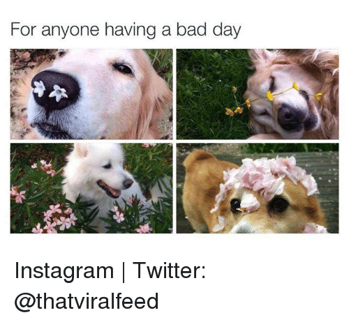 For Anyone Having A Bad Day Instagram Twitter Bad Meme On Meme