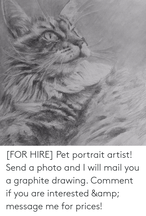 Mail, Artist, and Pet: [FOR HIRE] Pet portrait artist! Send a photo and I will mail you a graphite drawing. Comment if you are interested & message me for prices!